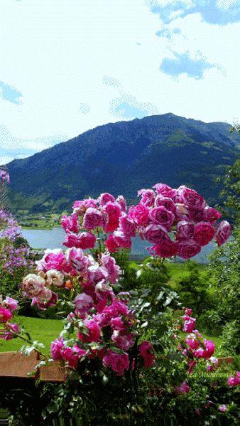 74 best imagenes jardines y flores images on pinterest - Jardines con rosas ...
