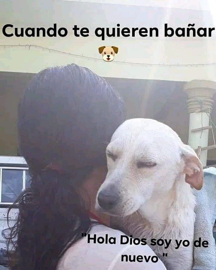 Pin De Blanca Ortiz De Leon En Memes Grasiosos Memes Divertidos Memes Perros Memes
