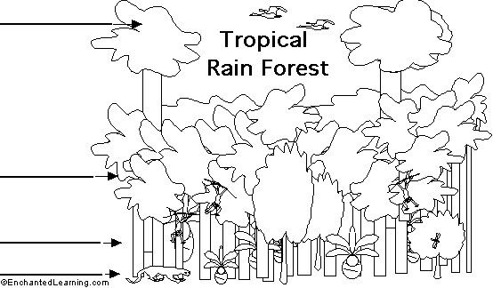 layers of amazon rainforest coloring pages