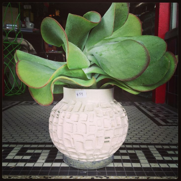 Always have succulents to use for display at Bowerbird