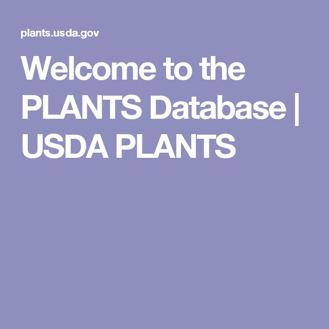 Welcome to the PLANTS Database | USDA PLANTS