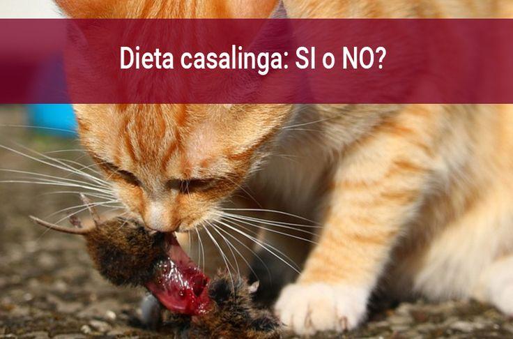 La dieta casalinga è consigliata per i gatti? Quali cibi per gatti fatti in casa possono essere validi? Quali ricette e consigli per una dieta casalinga per il gatto? Scoprilo qui