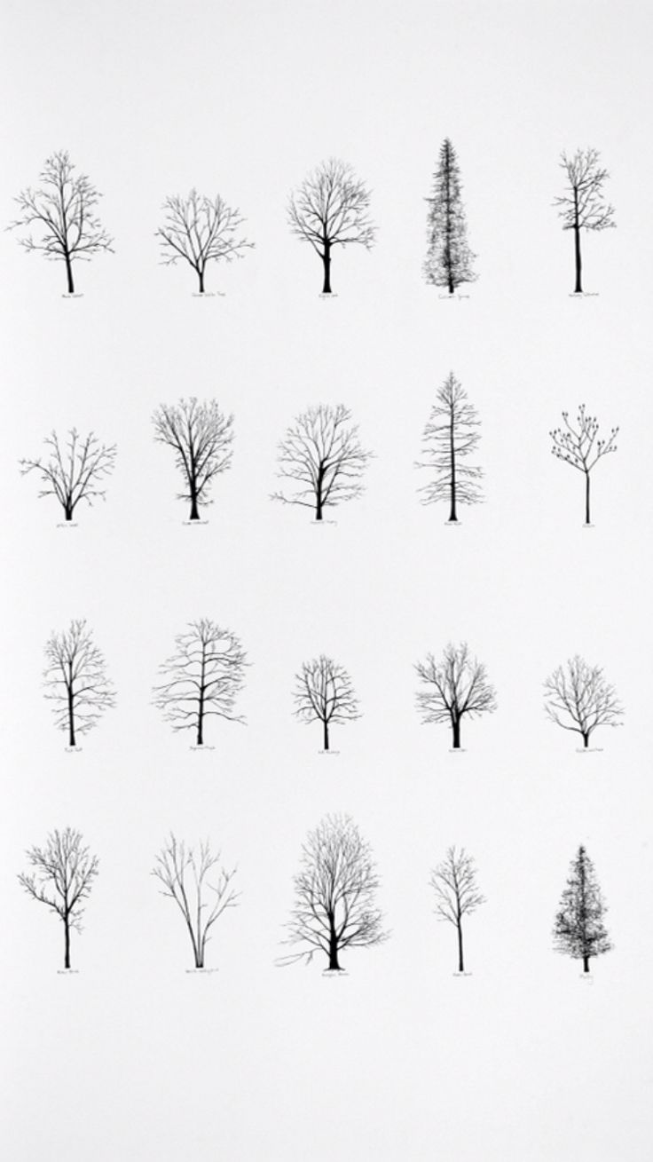 the 25 best tree drawings ideas on pinterest trees