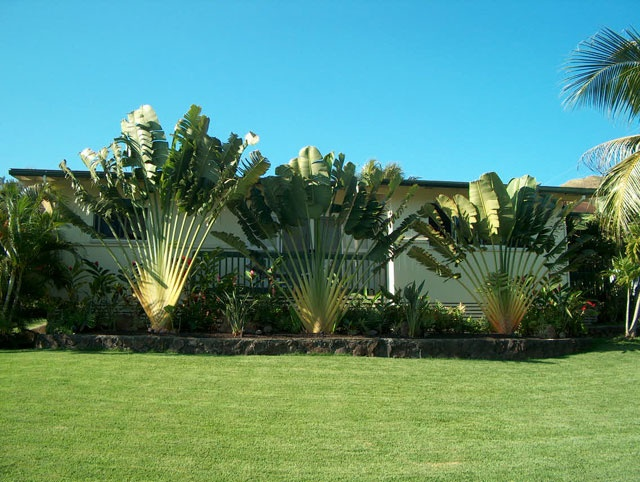 226 best hawaiian landscaping images on pinterest