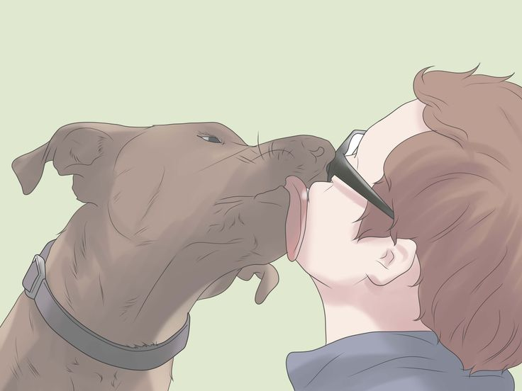 How+to+Start+a+Non+Profit+Animal+Rescue+--+via+wikiHow.com