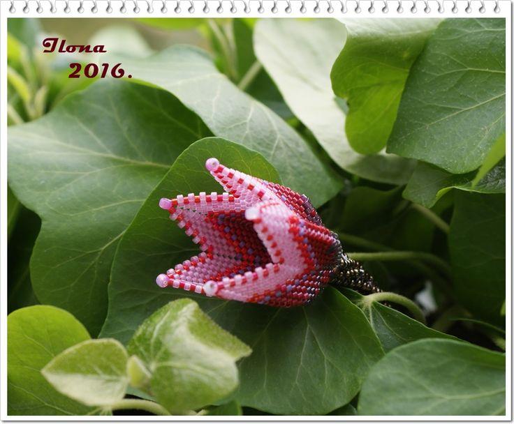 http://ilonagyongy.blogspot.hu/