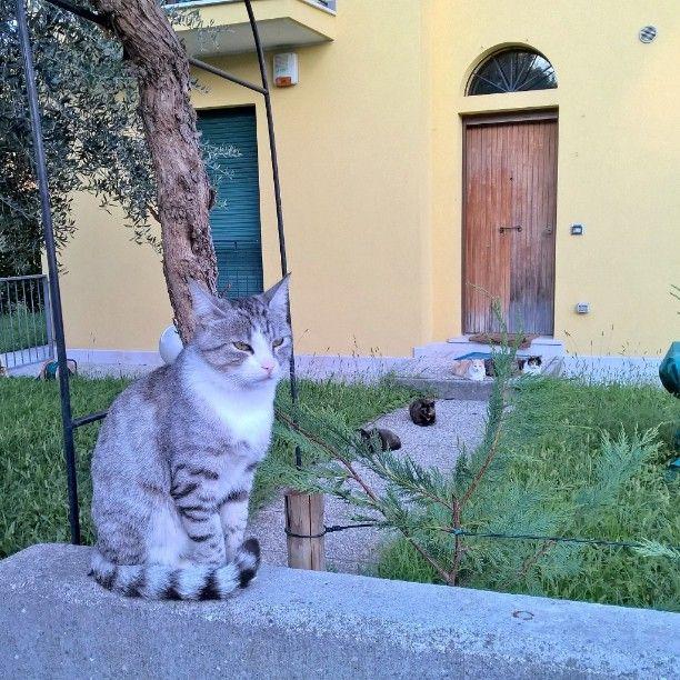 #gatti #cats #animali #felini #animals