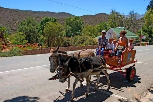 Donkey cart ride in De Rust