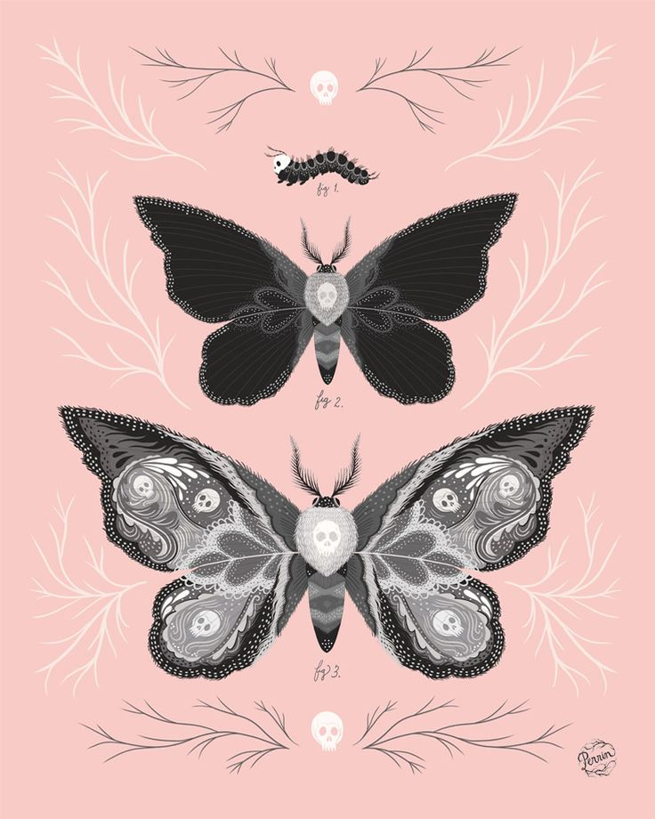 Death's Head Hawk Moths by MadeByPerrin #illustration #moth