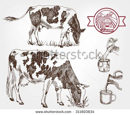 breeding cows. set of sketches made by hand