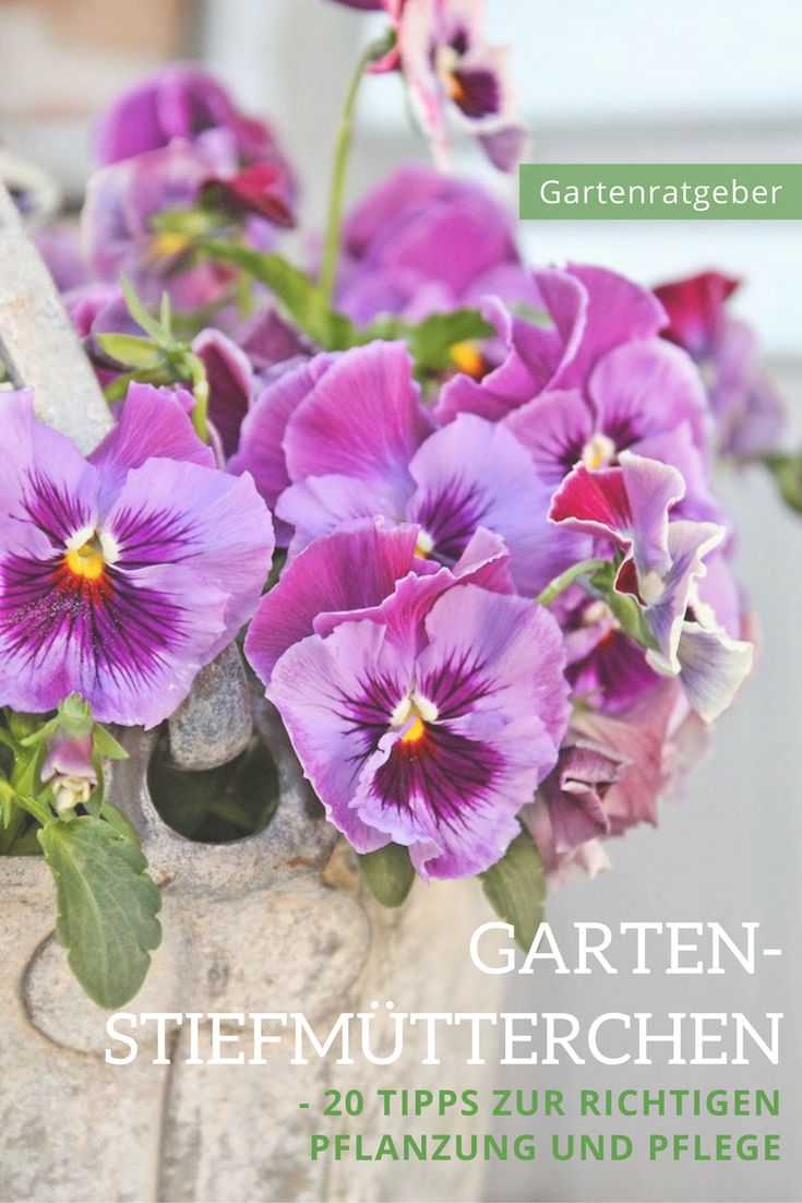 25+ Best Ideas About Garten Stiefmütterchen On Pinterest ... Garten Im September Pflege Tipps