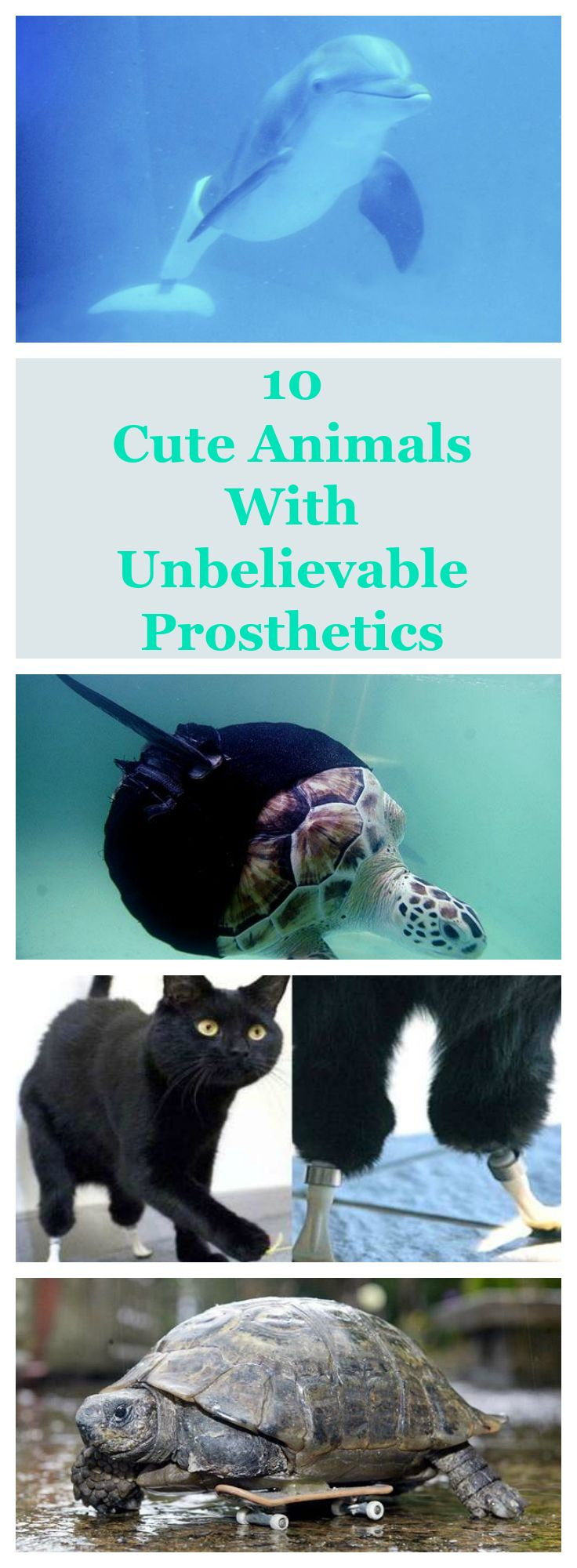 Awww.These 10 animals with prosthetics are the definition of cute! These adorable animals are motivation to never let life impede on your ability to manifest your dreams