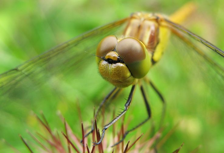 Dragonfly eyes/14 Beautiful Eyes Pictures – Bt images