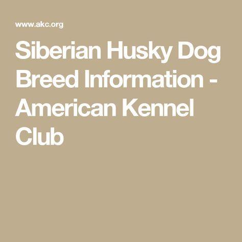 Siberian Husky Dog Breed Information - American Kennel Club