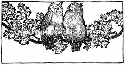 Cartoon Owl Pictures 2 - Two Owls on a Branch