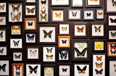 The Butterfly Room | Atlas Obscura