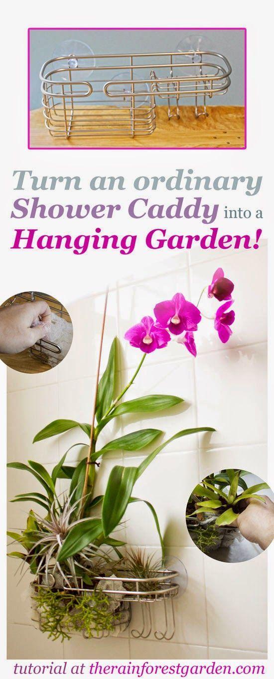 Turn a Shower Caddy into a Vertical Garden