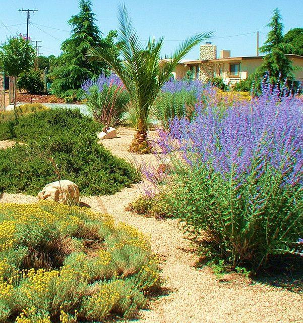 Drought Tolerant Landscaping Photos: Drought Tolerant, Landscaping And Purple Plants On Pinterest