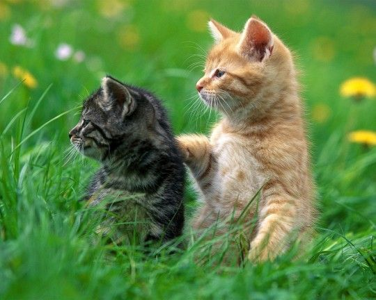 So Much Image Beautiful About Kitten With Images Kittens Cutest Cute Cat Wallpaper Cute Cats