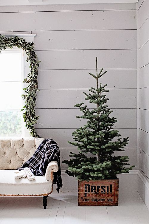 dreamy whites french farmhouse christmas collection and a 50000 dreamy whites gift card giveaway - Mini Live Christmas Trees