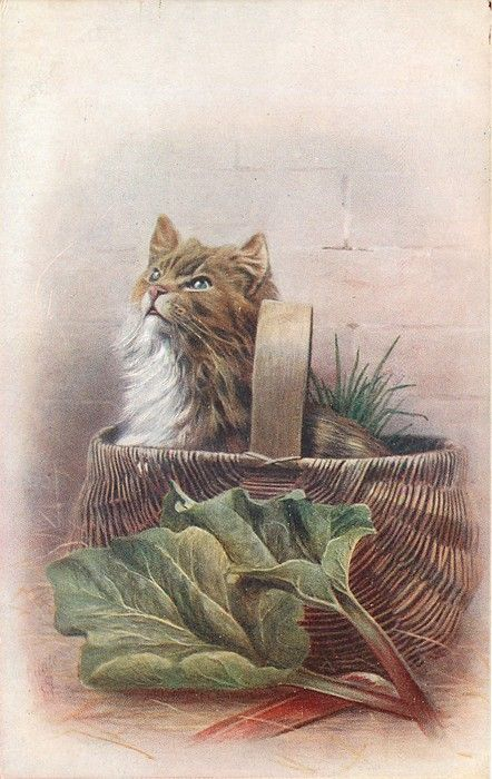 cat looks up left in wicker basket, rhubarb in front
