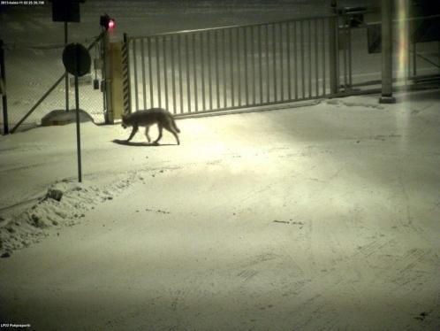 "Wolf entering ""nightshift"" at ABB in Vaasa, Finland."