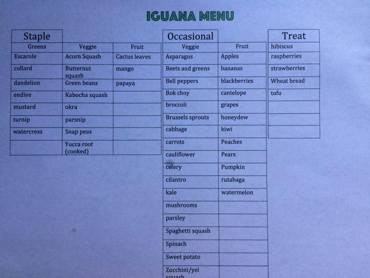 Iguana T Chart Reptiles Care Green
