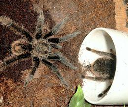 Homemade Spider Spray | eHow