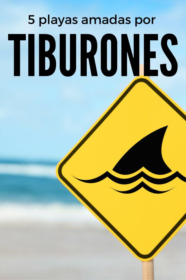 Descubre las 5 #playas amadas por #tiburones, pero que también valen la pena visitar!! #DespeBlog