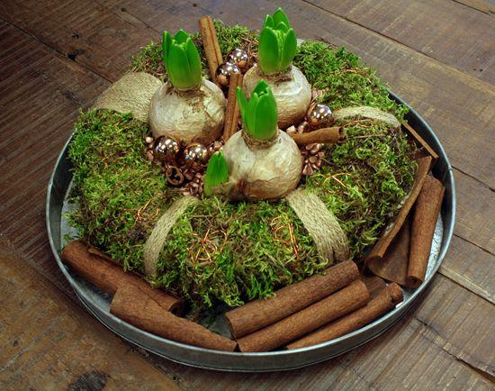http://www.holmsundsblommor.blogspot.se/2013/12/krans-med-hyacinter.html Mosskrans med hyaciner, kanel och kulor