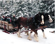 A visit to a maple sugar farm can be fun anytime of year, in winter by sleigh