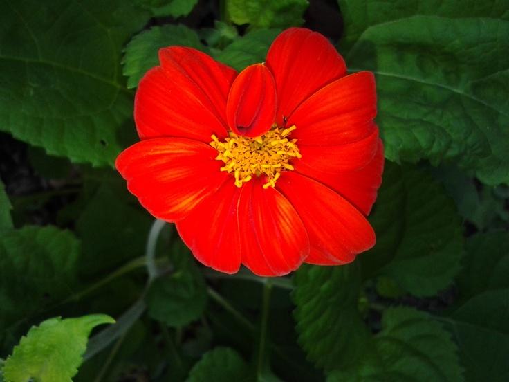 Red flower XD