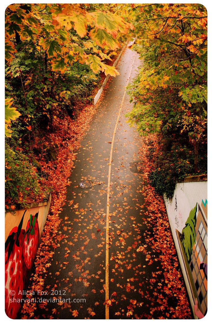 Galloping Goose trail in the autumn