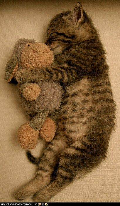 If you don't find this cute, you have no soul...: Sleep Beautiful, Snuggles, So Cute, Cuddling Buddies, Stuffed Animal, So Sweet, Cute Kittens, Sweet Dreams, Baby Cat