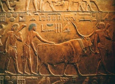 Rilievo funerario con geroglifici e scena di allevamento del bestiame. Bassorilievo nella Necropoli di Saqqara, presso Menfi, Egitto. Ca. 2400 a.C.