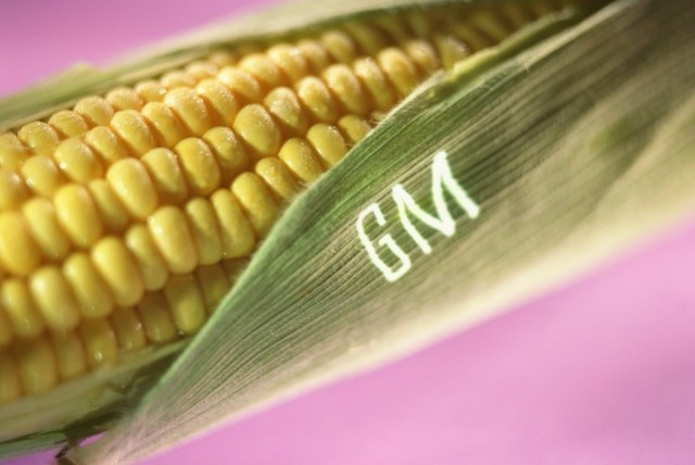 GMO Corn is Coming to a Walmart Near You!: Food To Avoid, Engine Food, Food Education, Gmo Labels, Avoid Gmos, Gmo Food, Food Labels, Food Expo, Unhealthi Food