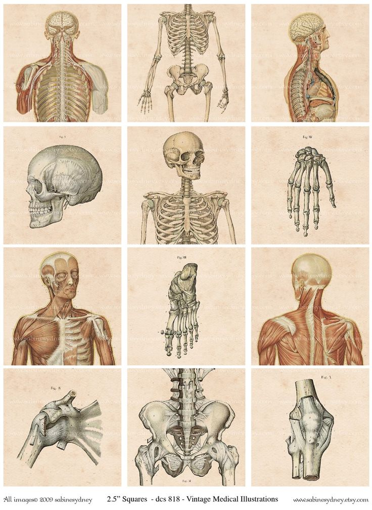 114 best body anatomy images on Pinterest | Black people, Anatomy ...