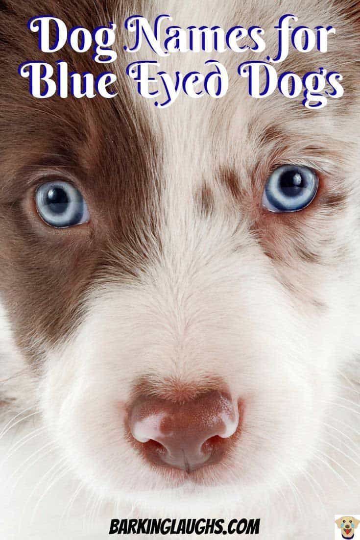 Over 90 Of The Most Hypnotic Blue Eyed Dog Names Blue Eyed Dog Names Blue Eyed Dog Dog Names