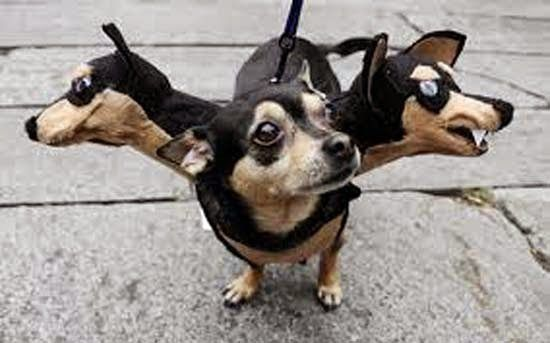 cachorro de tres cabeças