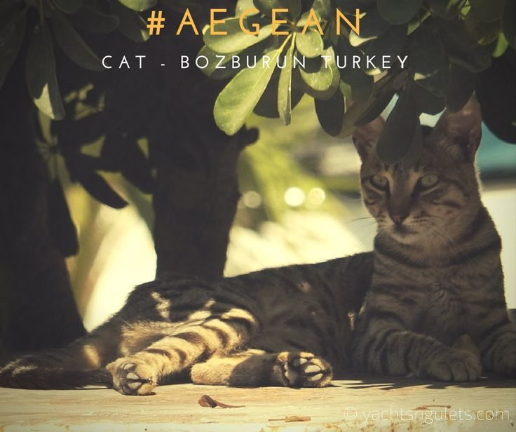#aegean #cat on a #sunday afternoon in the seaside town of #bozburun #homeof #turkishgulets - have a #greatweekend ! :)