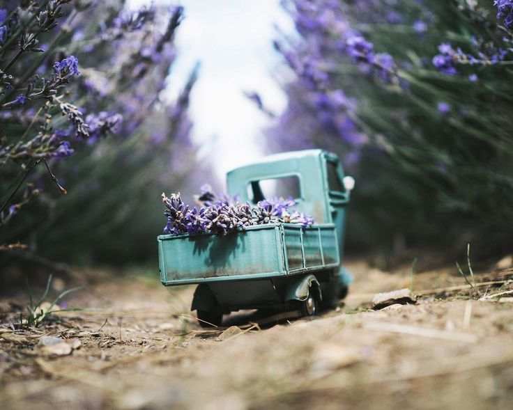 Anyone fancies some lavender delivery? - by travellingcars (Kim Leuenberger)