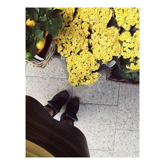 Calandivan, underbar och underskattad!  #calandiva #våreld #gulblomma #blomma #vackerväxt #växt #krukväxt #nyhet #flower #lifestyle #plant #pottery #pot #blomster #trend #trendig #inspo #inspiration #garden #gardening #trendy #isabelmarant #green #gogreen #nature #beauty
