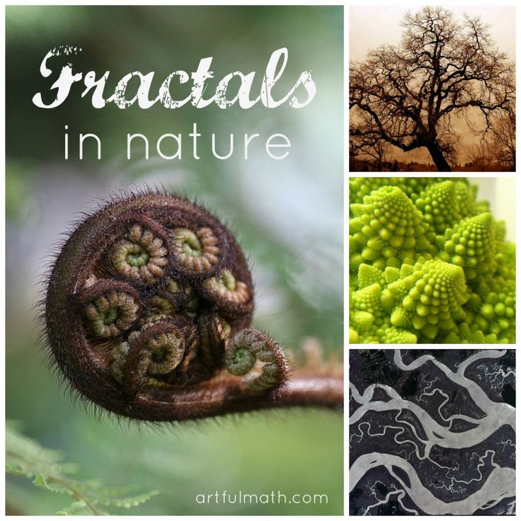 Take a math walk and look for fractals in nature.
