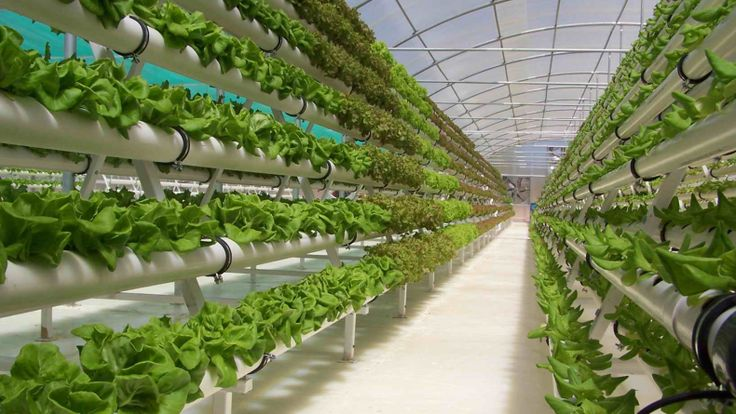 Vertical farm, la tecnologia per un' agricoltura urbana sostenibile | EcoProspettive