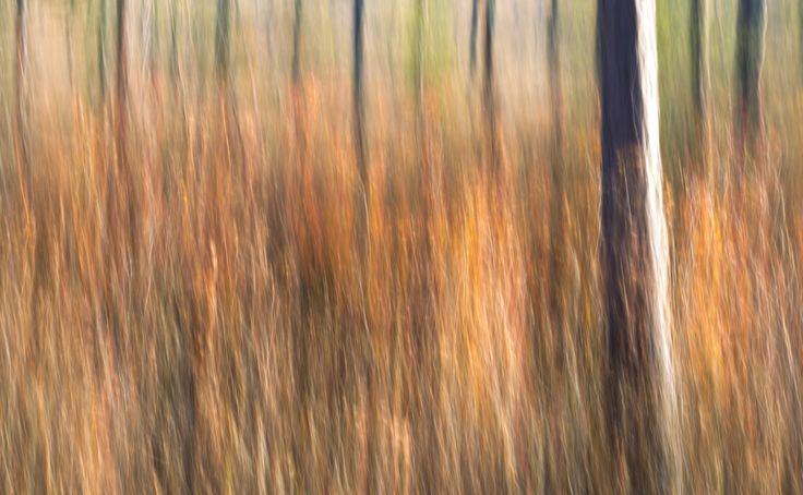 FINEARTSEEN - Autumn in Finland series : Paltry pines in a quagmire by Johanna Amnelin. A beautiful manipulated photograph inspired by nature. Available on FineArtSeen - The Home Of Original Art. Enjoy Free Delivery with every order. << Pin For Later >>