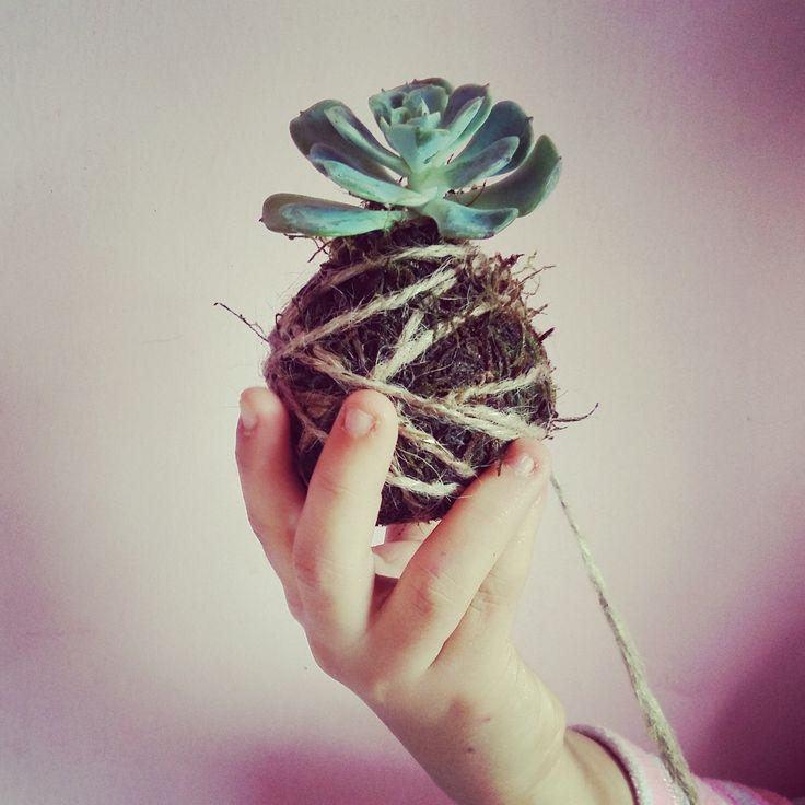 Pondríamos suculentas en todos lados! #tiendaverdeamor #rinconverde #sucuamor #stringgarden #succulentseverywhere