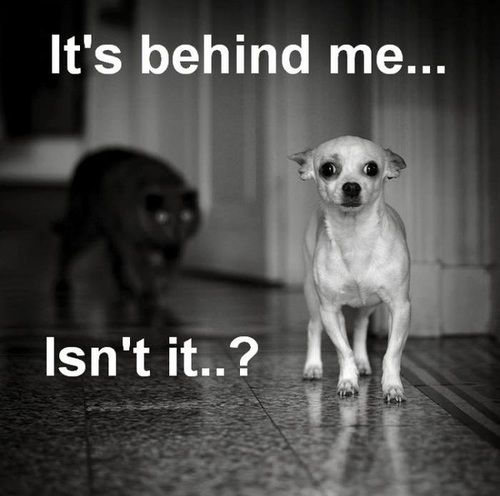 : Funny Pics, Funny Dogs, Dogs Cat, Funny Stuff, Dogs Running, Keep Walks, Funny Animal, So Funny, Little Dogs