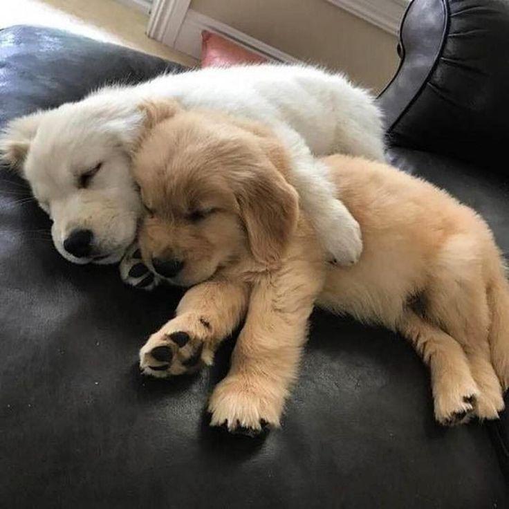 Awwwww! Wish all dogs had that life they deserve so much❤ – Sophia El Bakir