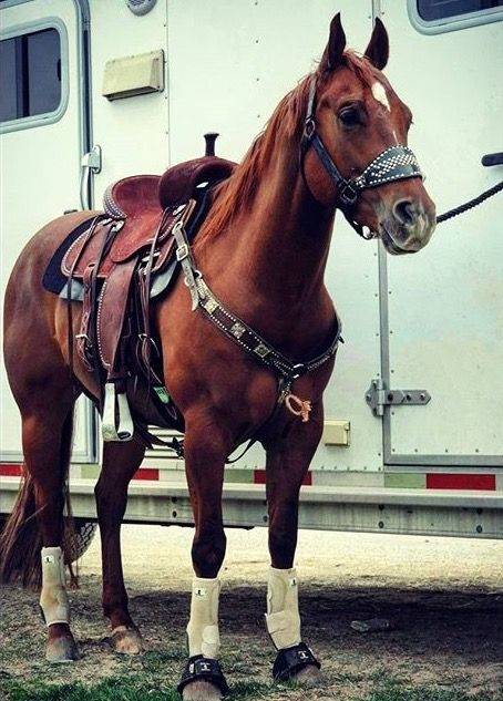 Maud: this is Jlo my sis barrel racing horse, today I went to see her in a rodeo