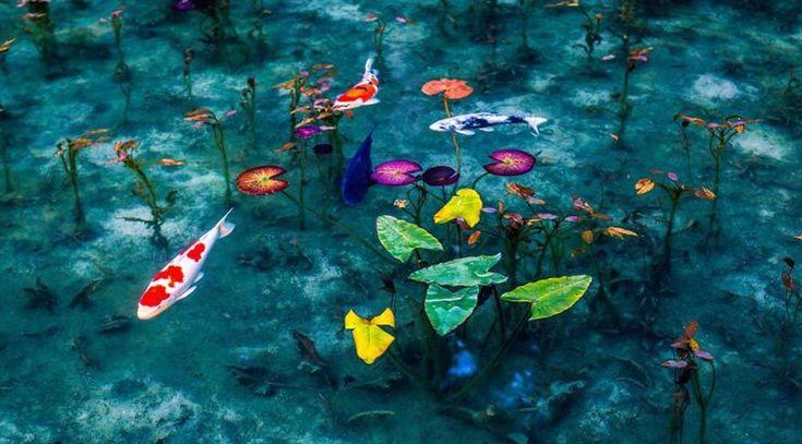 Japonya'nın Monet tablolarını andıran gölü Japonya'ya seyahat planlarken Tokyo, Osaka, Kobe gibi şehirler listenin ilk sıralarında yer alsa da bazen turist kitaplarında yer almayan yerleri de listeye eklemek gerekebilir.